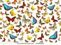 stock-photo-butterflies-background-63560893