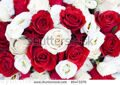 stock-photo-roses-85473379