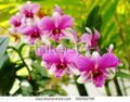 stock-photo-colorful-soft-pink-orchids-on-a-hanging-ceramic-pot-under-natural-lighting-outdoor-with-