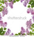 stock-photo-light-lilac-flowers-frame-isolated-on-white-background-401714218
