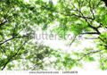 stock-photo-nature-green-leaves-140918878