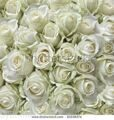 stock-photo-white-roses-as-a-square-background-81038374